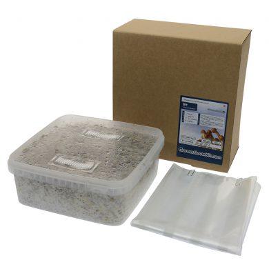 B+ Psilocybe Amplus Magic Mushroom Grow kit (Large - 2100cc)