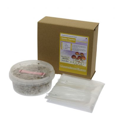Golden Teacher Psilocybe Aurumescens Magic Mushroom Grow kit (Small - 250cc)