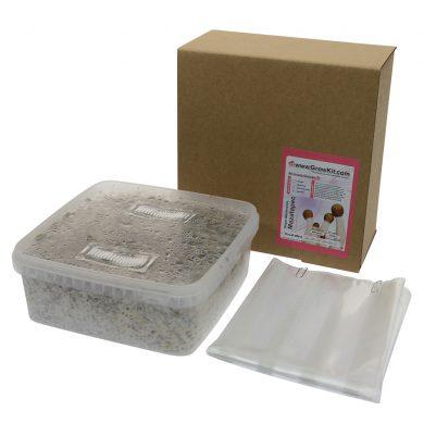 Mazatapec Psilocybe Mayiescens Magic Mushroom Grow kit (Large - 2100cc)