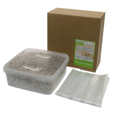 Mexican Stropharia Cubensis Magic Mushroom Grow kit (Large - 2100cc)