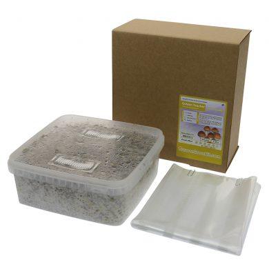 Golden Teacher Psilocybe Aurumescens Magic Mushroom Grow kit (Large - 2100cc)