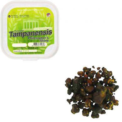 Tampanensis Magic Truffels (Psilocybe) smartific.com