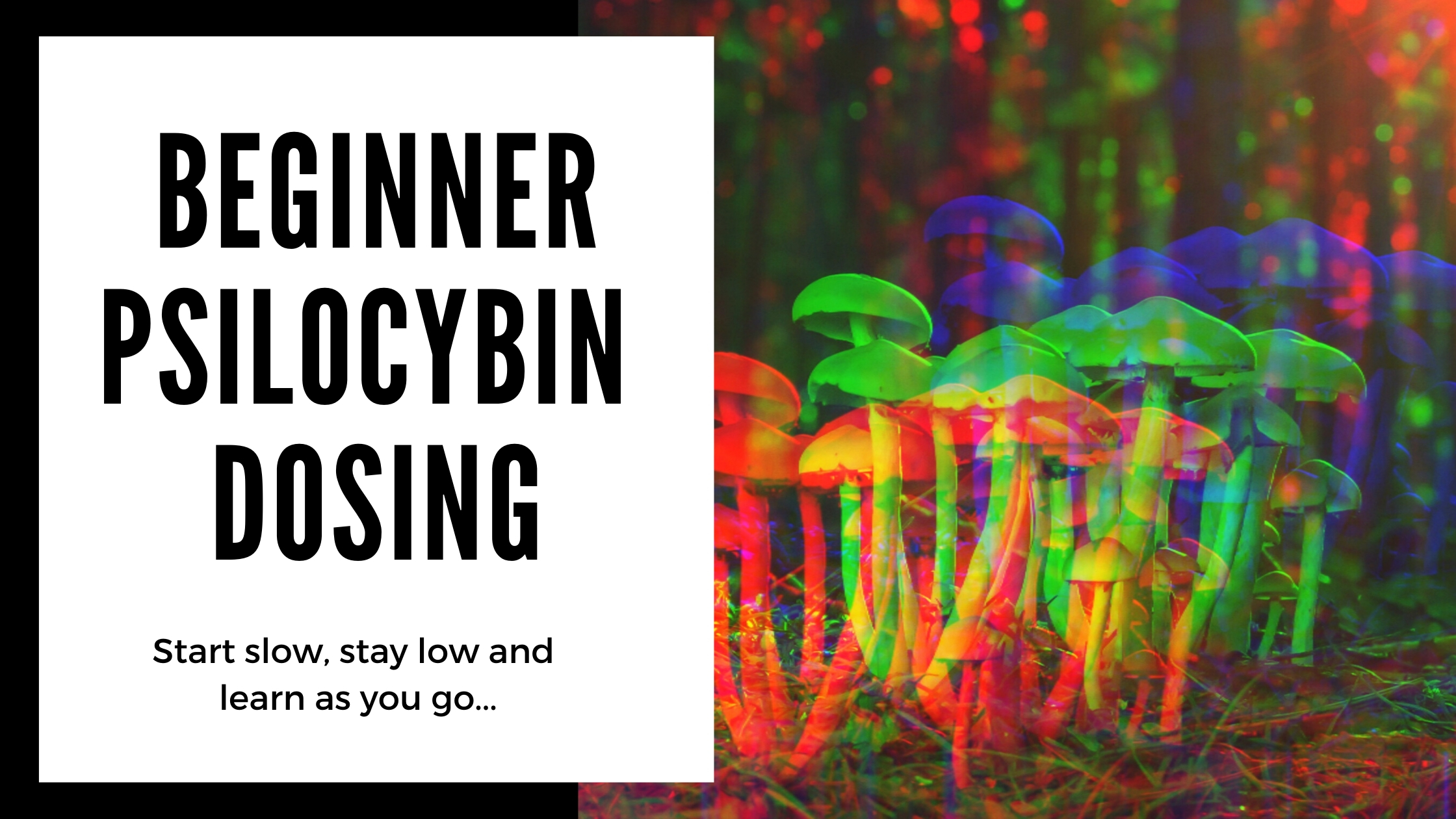 what is beginner magic mushroom dosing