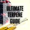 cannabis terpines ultimate guide smartific online smartshop cannabis seed webshop