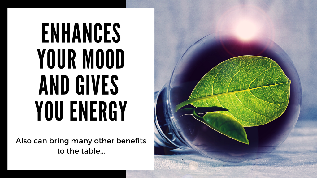 Everything You Need to Know About Kanna - enhances your mood and gives you energy - Smartific blog
