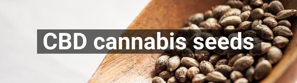 ✅ All high-quality CBD cannabis seeds from Smartific.com