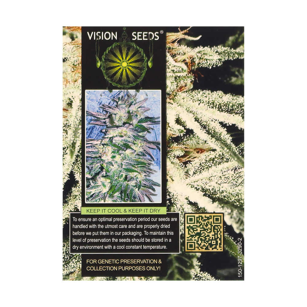 🌿 Vision Seeds Feminized Cannabis Seeds RUSSIAN SNOW Smartific 2014264/2014263
