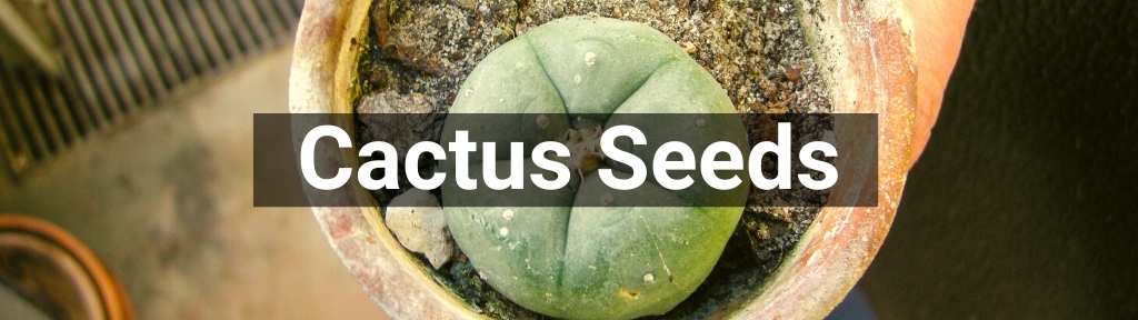 ✅ All high-quality Cactus Seeds from Smartific.com
