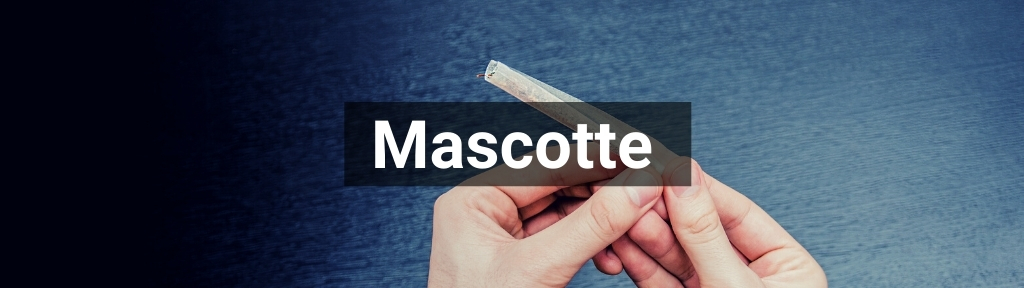✅ All high-quality Mascotte products from Smartific.com