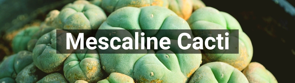 ✅ All high-quality Mescaline Cacti from Smartific.com