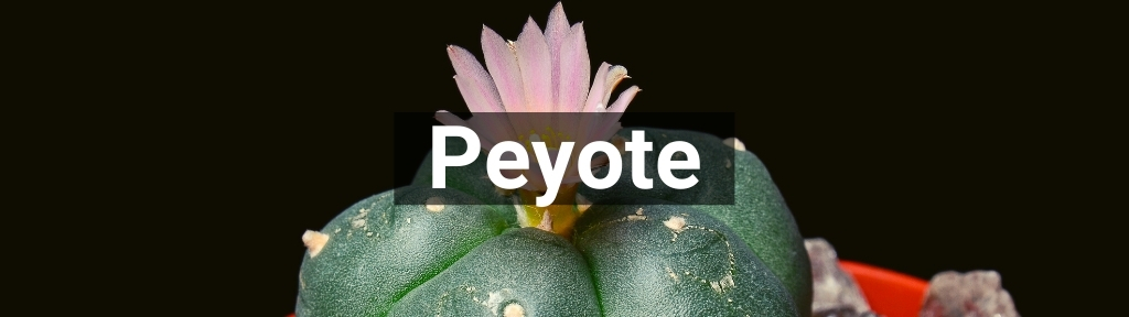 ✅ All high-quality Peyote from Smartific.com