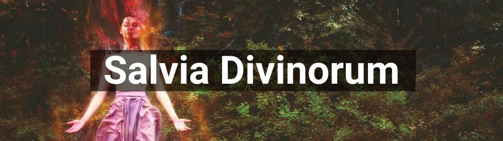 ✅ All high-quality Salvia Divinorum from Smartific.com
