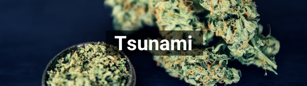 ✅ All high-quality Tsunami products from Smartific.com