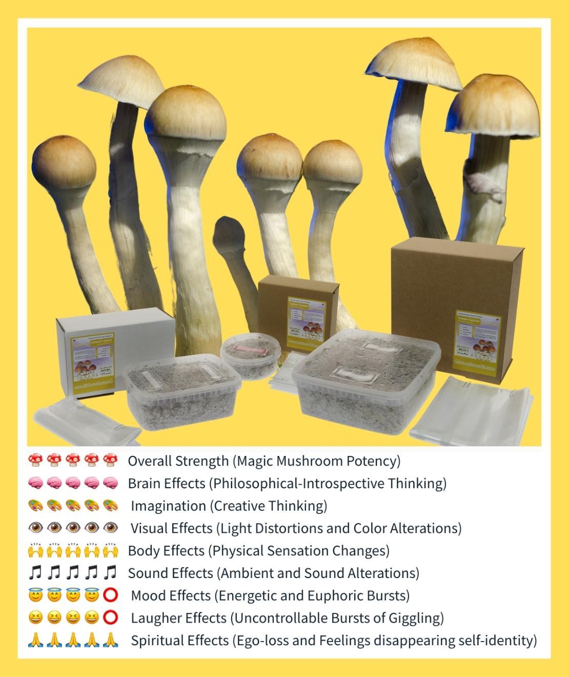 Golden Teacher Grow kit strength chart
