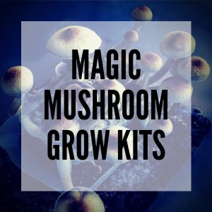 magic mushroom grow kits everything you need to know about smartific blog