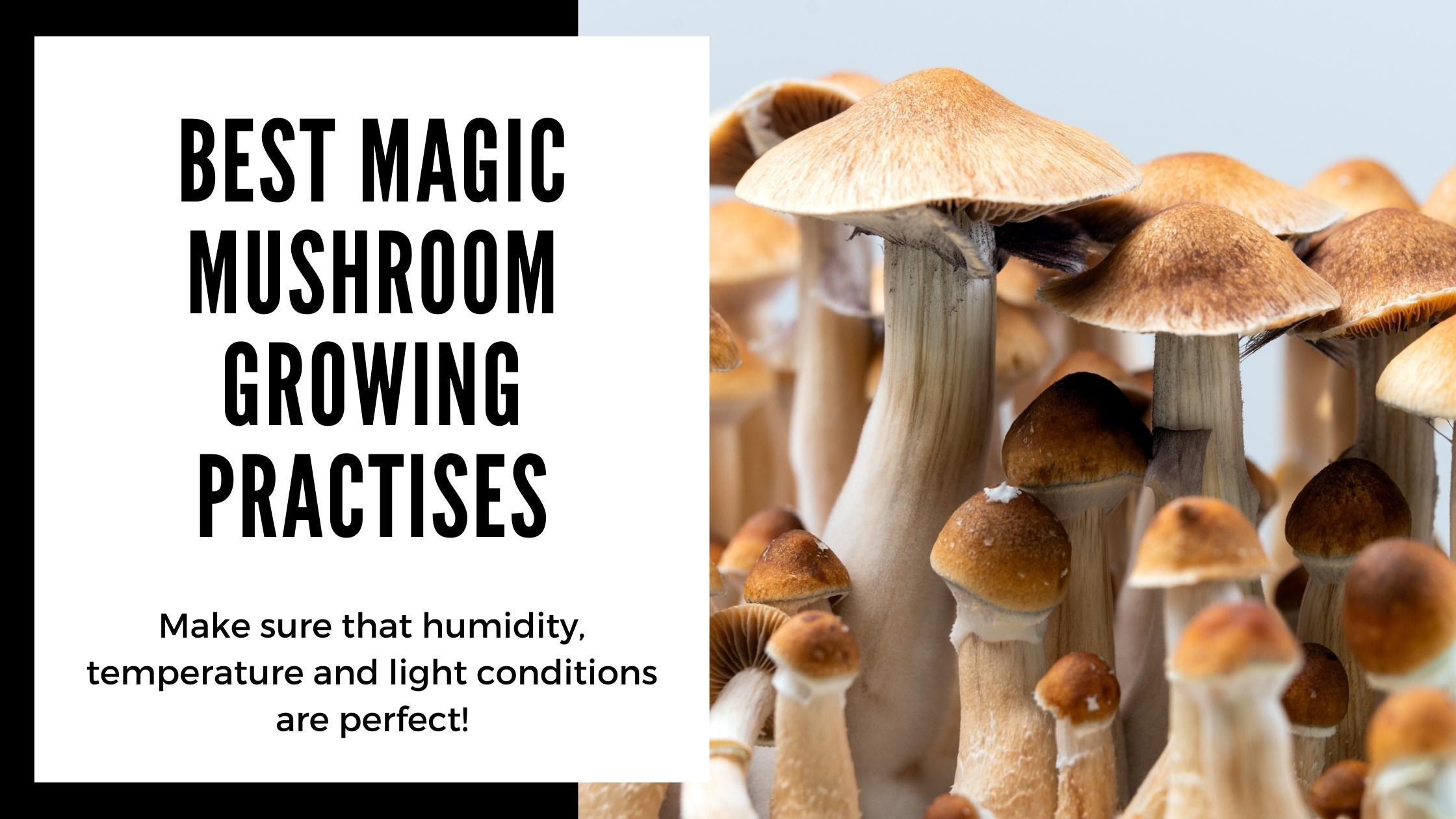 Best Magic Mushroom Grow Kit tips