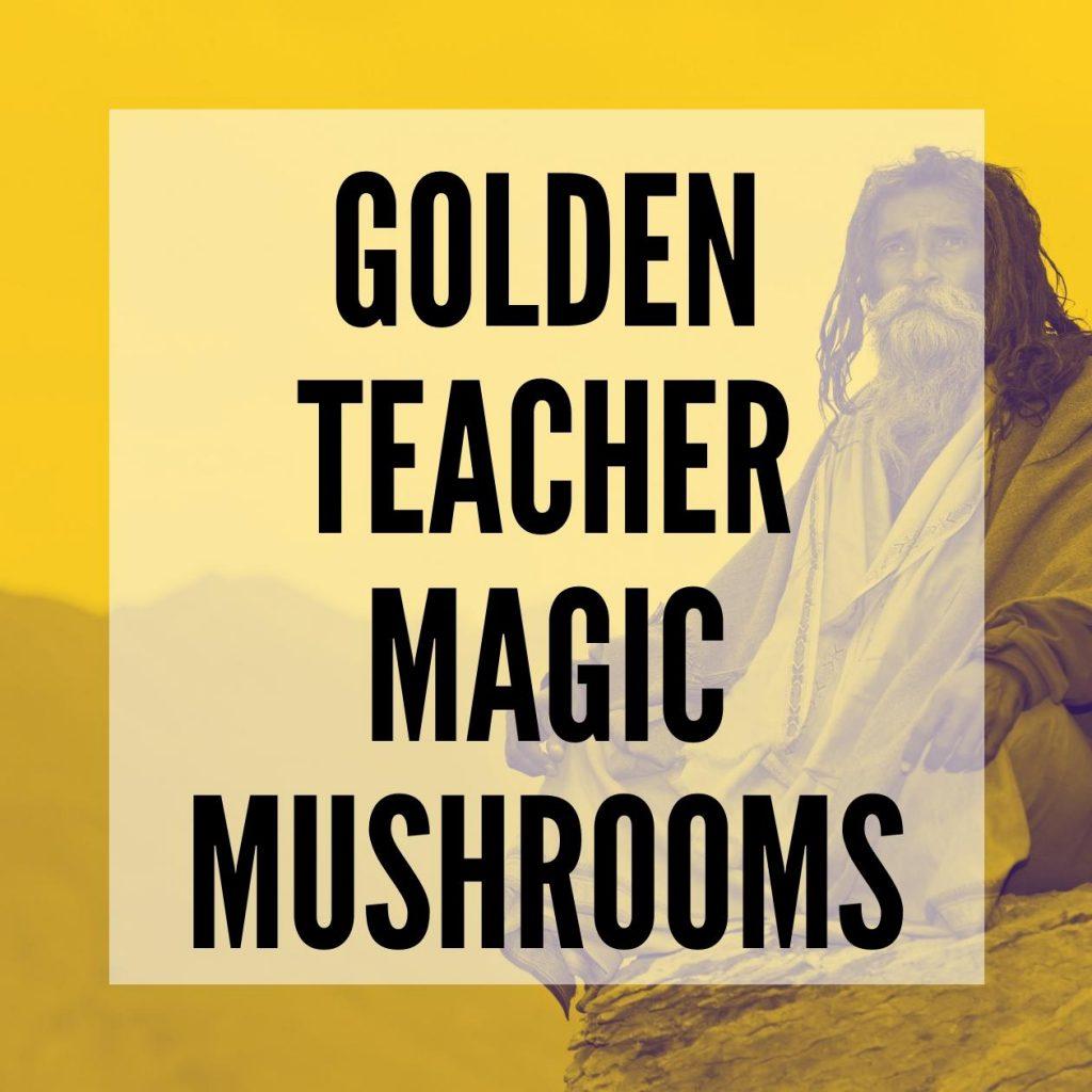 Golden teacher magic mushrooms