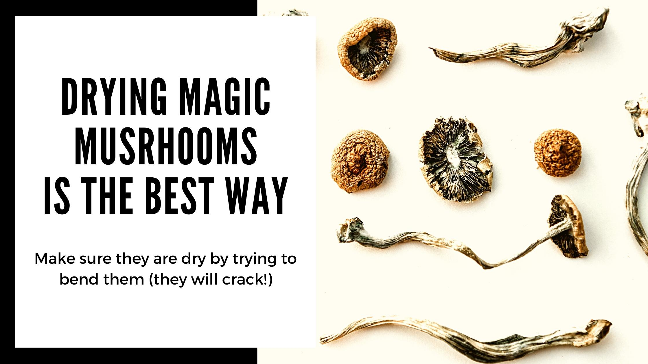 How to dry Magic Mushrooms from your Grow Kit