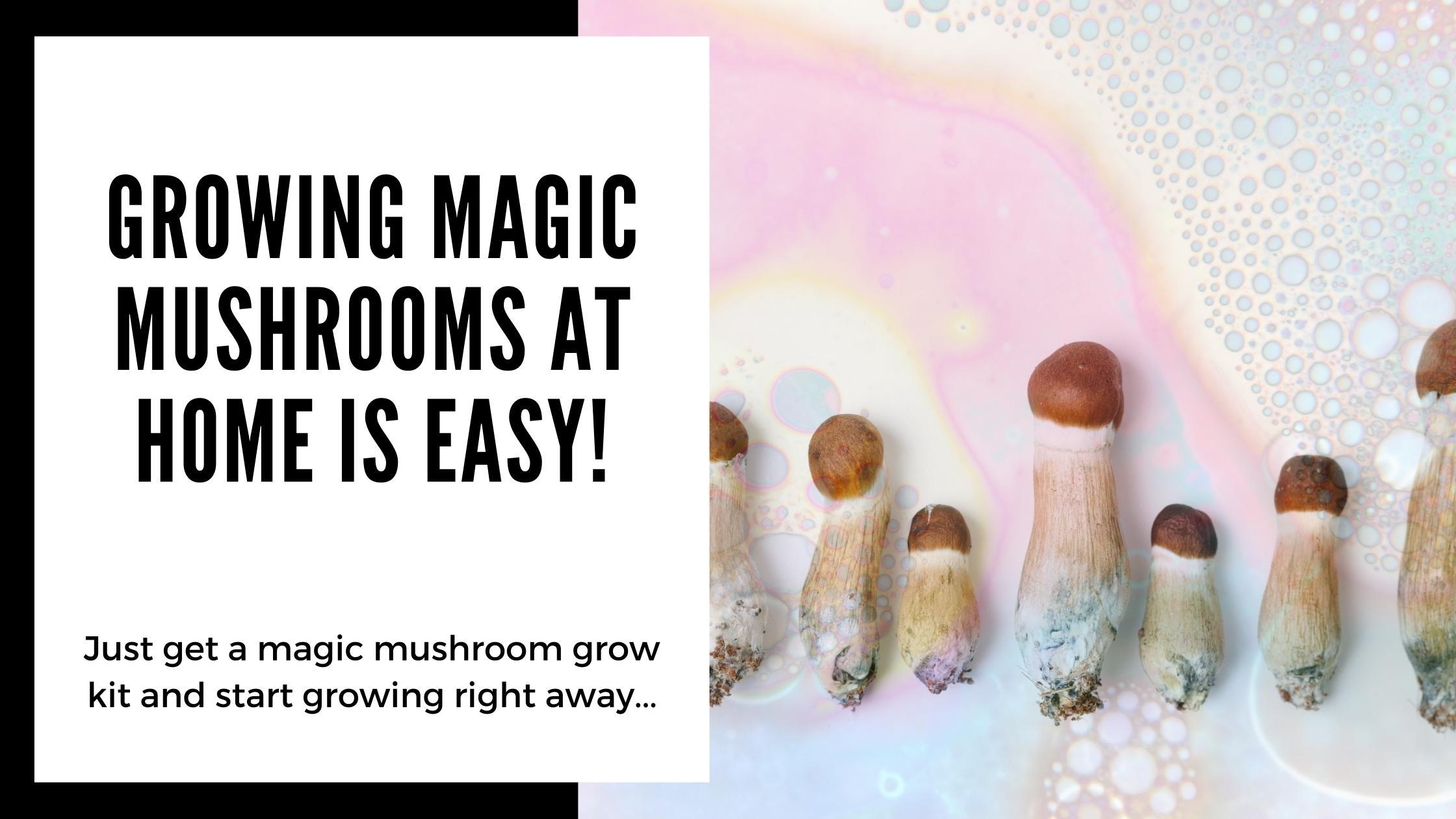 Magic Mushroom Grow Kit to grow magic mushrooms at home