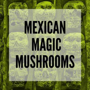 Mexican magic mushrooms