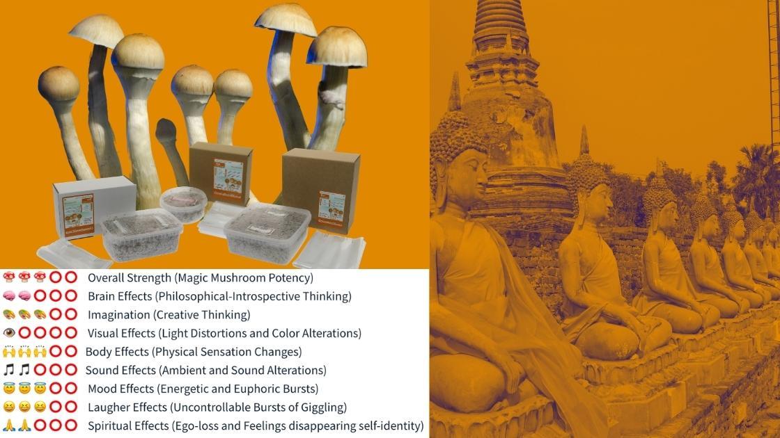 Thai Grow kit strength chart pros & cons