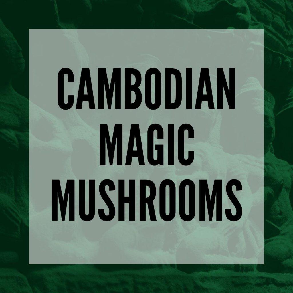 cambodian magic mushrooms