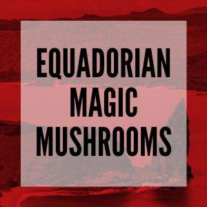 equadorian magic mushrooms