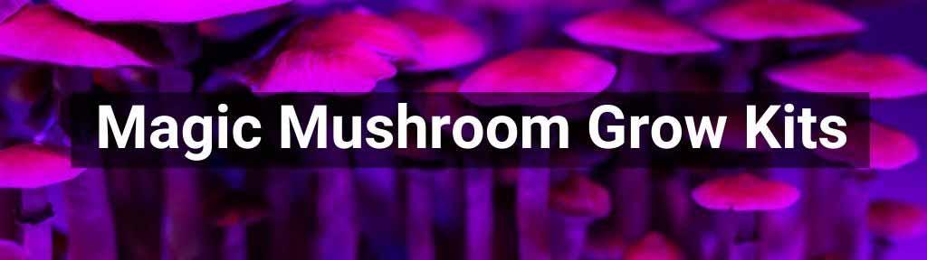 Magic Mushrooms growkits