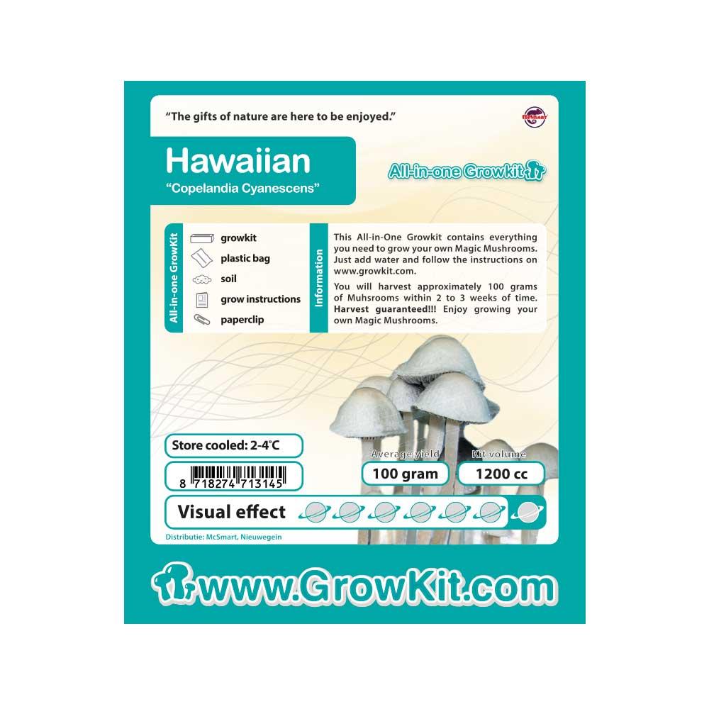 Hawaiian Copelandia Cyanescens Magic Mushroom Grow Kit